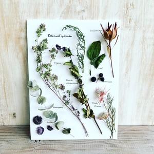 【キット】『ハーブと花の植物標本』作り