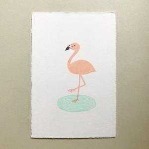 postcard (flamingo)