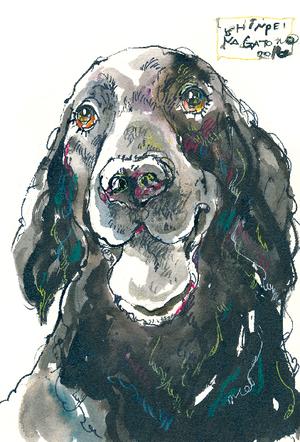 [145]犬