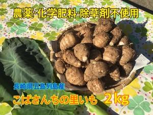 『里芋』2kg