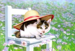 【印刷物】ポストカード:れんげ畑の麦わら帽子の猫