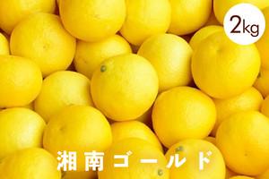 湘南ゴールドー2kg ー 湘南生まれの新感覚オレンジ