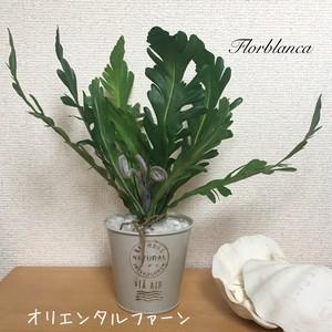 本物そっくり 観葉植物 オリエンタルファーン