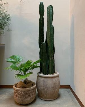 【都内近郊専売】サボテン・ヌーダム(大) terra-cotta pot