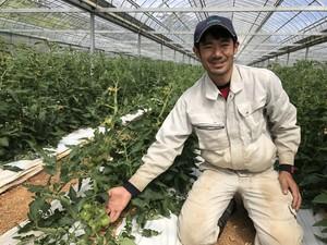 有機トマト【桃太郎】4kg