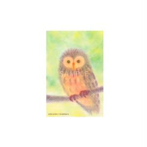 【選べるポストカード3枚セット】No.158 ふくろう2