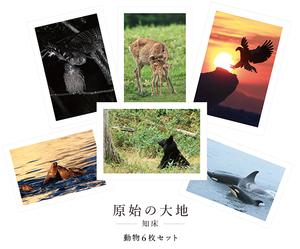 原始の大地-知床- 動物 - A5サイズ6枚セット