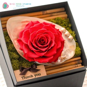 【母の日限定】Shell  Flower  Box  Arrangement