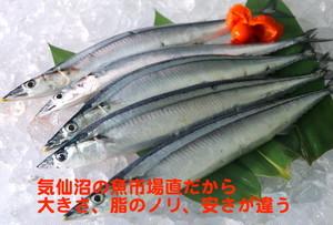 三陸気仙沼の代名詞「さんま」、魚市場の仲買が直接仕入れるから、この大きさ、この脂のノリ、このおいしさで、この価格「特大さんま10尾」