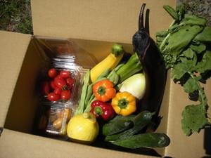季節の野菜福袋 定期4回(7月~10月)お届け 少しお得です