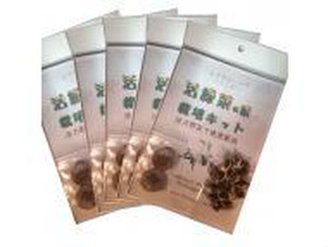 モリンガ栽培キット×5セット 種子10個に増量