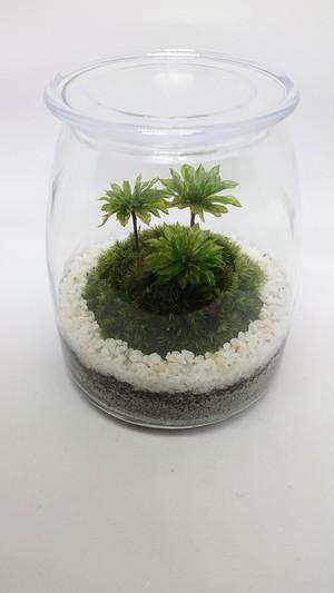 苔ボトル Kokebottle Moss bottle ライト付きセット 027
