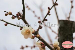 青葉の梅林~Plum grove~⑨