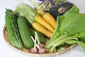 【命の薬〜ぬちぐすい〜】沖縄野菜セット Lサイズ