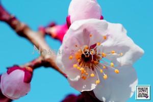 青葉の梅林2~Plum grove~⑤