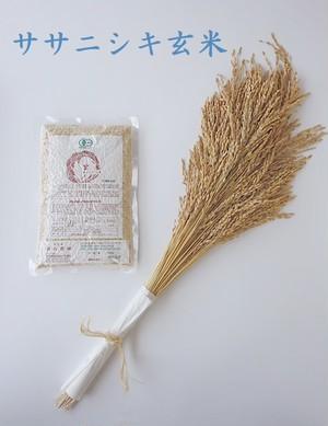 【500g】有機ささにしき玄米