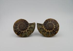 【化石宝石】アンモライト セット