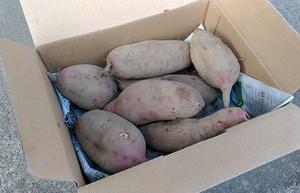 【期間限定】安納芋5kg(予約販売)