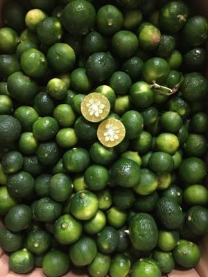 シークワーサー(Citrus Lemon) 1kg