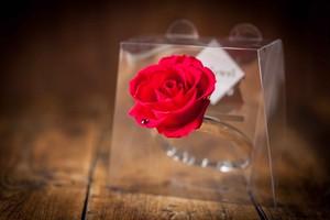 【花の誕生日プレゼント】プリザーブドフラワー/Jewel Ring-誕生日カラー-4月