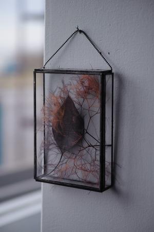 □(スクエア)植物標本〚スモークツリー、ユーカリ 葉〛