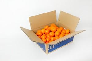温州みかん 家庭用・キズ有(3kg)