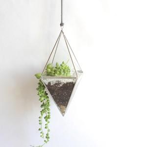 """hanging terrarium """"八面体"""" / silver [多肉植物]"""