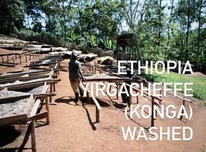 『500g』 Ethiopia Yirgacheffe  (Konga) Washed 浅煎り