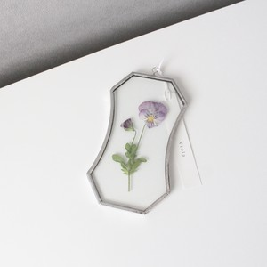 ビオラ / A piece of nature Plate