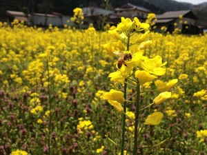 春のいろいろな花100g  2019. ハチだけの仕事 はちみつ 生はちみつ 非加熱