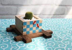 涼しげな金魚枡とサボテンで夏を楽しむ