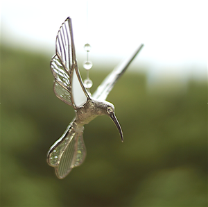 Hummingbird wings up  (M-clear)
