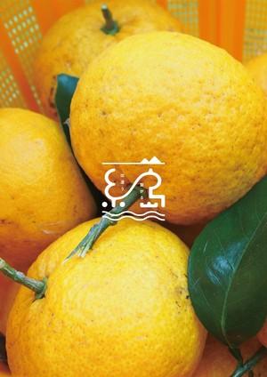 15kgセット【農薬・化学肥料不使用】福岡県糸島市の甘夏と、レシピ&オリジナルスパイス付き