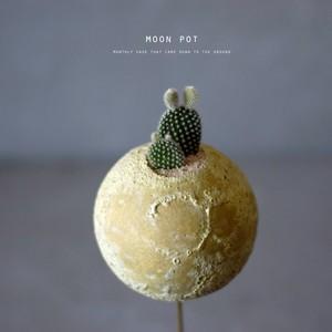 moon pot(サボテン・バニーカクタス)