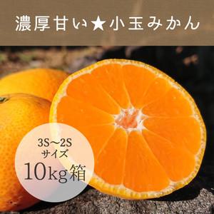 ★濃厚甘い★小玉みかん【10kg】送料別