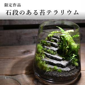 苔景−石段のある苔テラリウム−2021.6.27#2【苔テラリウム・現物限定販売】