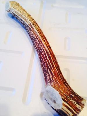 蝦夷鹿の角30㎝~キングサイズ1本(北海道特産 犬用おやつ エゾシカの角ドッグフード 輪切りタイプ)