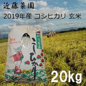 2019年 新潟県産 令和1年産 コシヒカリ 玄米 20kg 近藤菜園