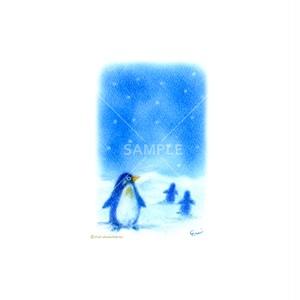 【選べるポストカード3枚セット】No.154 ペンギン