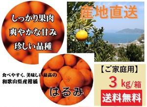 【早期予約販売】和歌山県由良町産 柑橘類【はるみ】【ご家庭用】3kg /箱【送料無料】