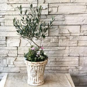 オリーブの木と小花のギャザリング寄せ植え