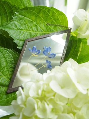 HACOMIDORI 植物絵画(mirror) デルフィニウム