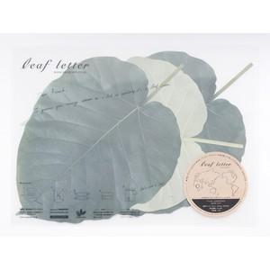 leaf letter - Ficus umbellata
