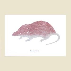 トガリネズミ(赤)のポストカード