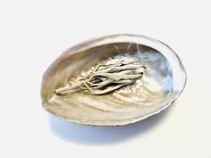 浄化用 アワビ貝殻(大)