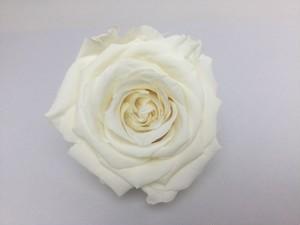 Premiumバニラホワイト(P101)5~6cm×6~7cm