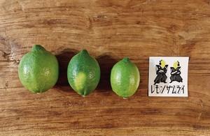 【ご家庭用1kg】瀬戸田レモン(7〜9個) ノーワックス・防腐剤なし