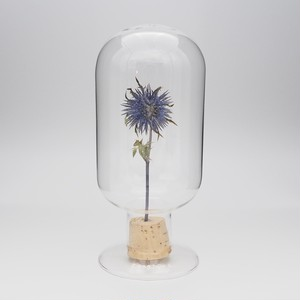 Glass Dome Object/ Eryngium L