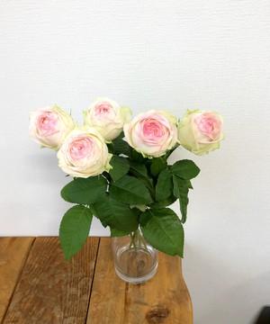 ※市場直送便!FINEROSE 10本 ★バラ品種名: アルヌワブラン