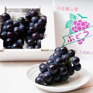 丹波篠山後川産「しつかわの藤稔」大粒